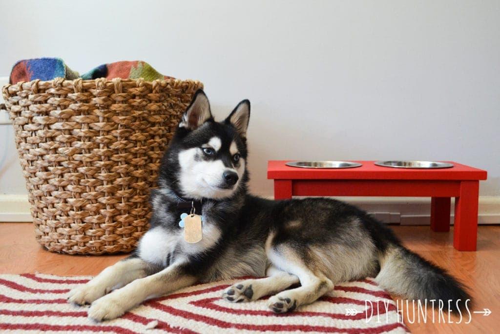 Top DIY Dog Bowl Stand - DIY Huntress KZ01