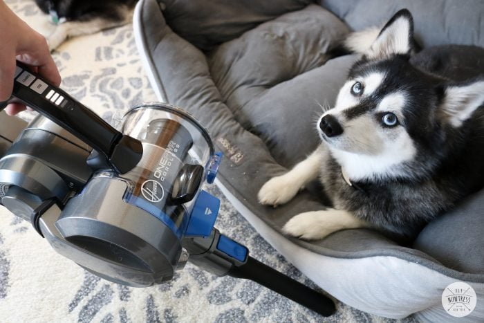 how to clean pet messes