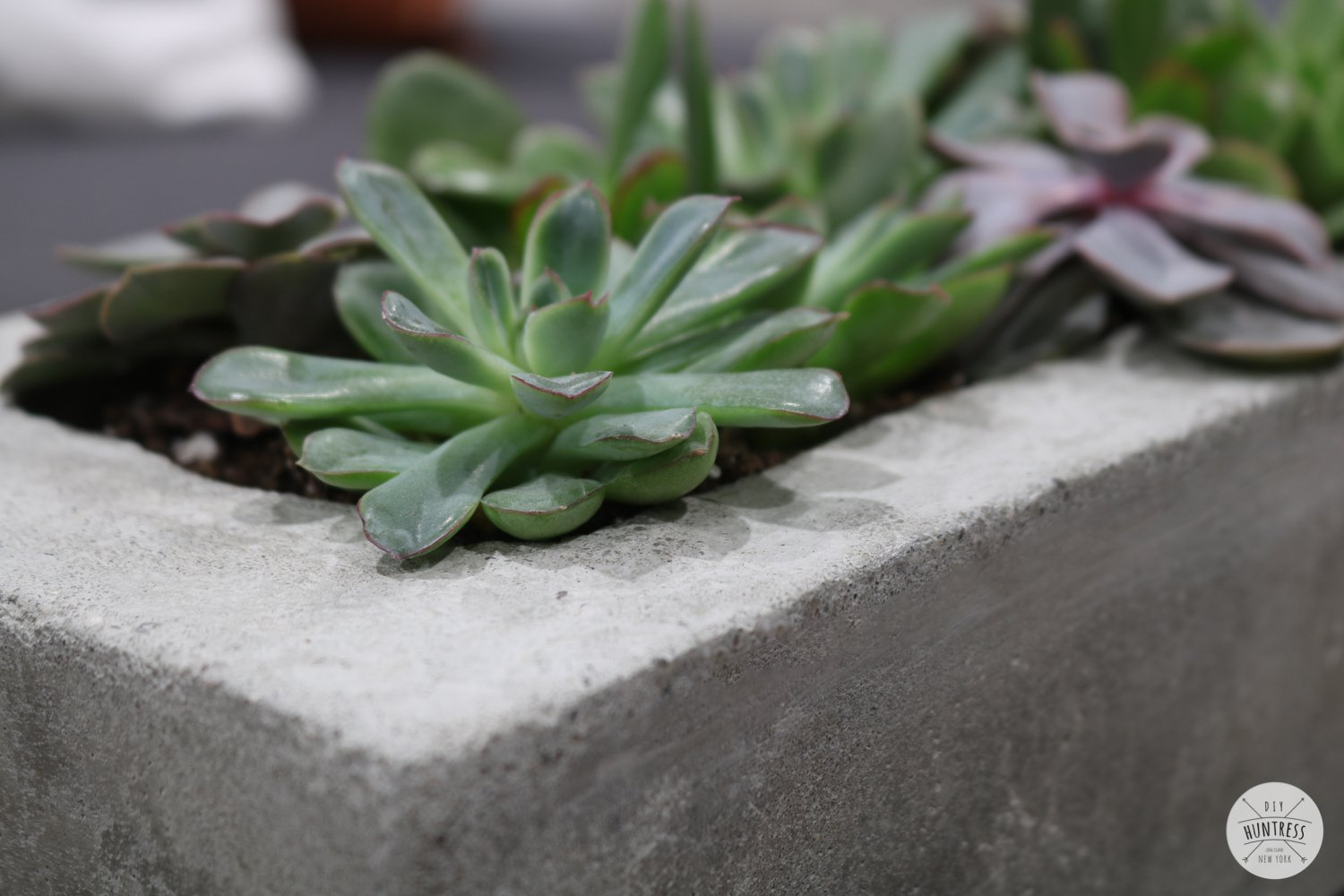 concrete planter for succulents